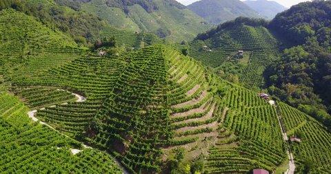 Drone view of Prosecco's hills in the area of Conegliano and Valdobbiadene - Italy.