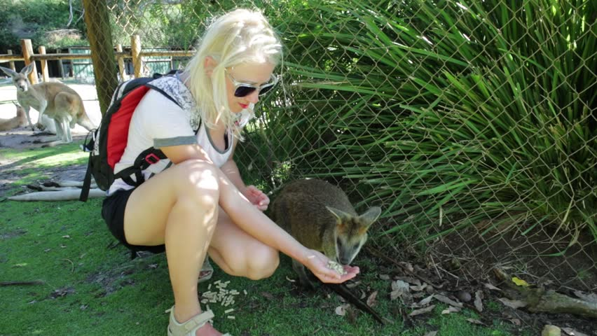 A wallaby eating from the hand of a young caucasian tourist woman outdoor. Whiteman, near Perth, Western Australia.