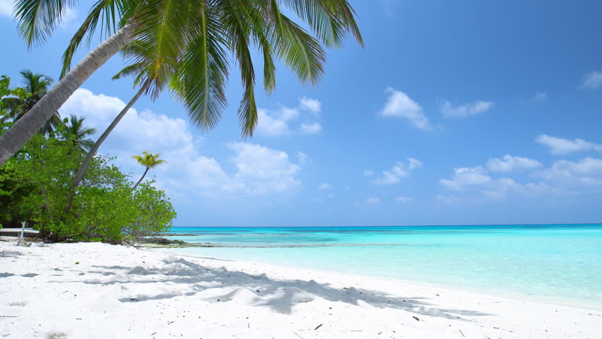 Tropical beach with coconut palm trees, Maldives travel destination