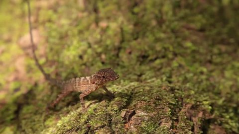 Anole on Log