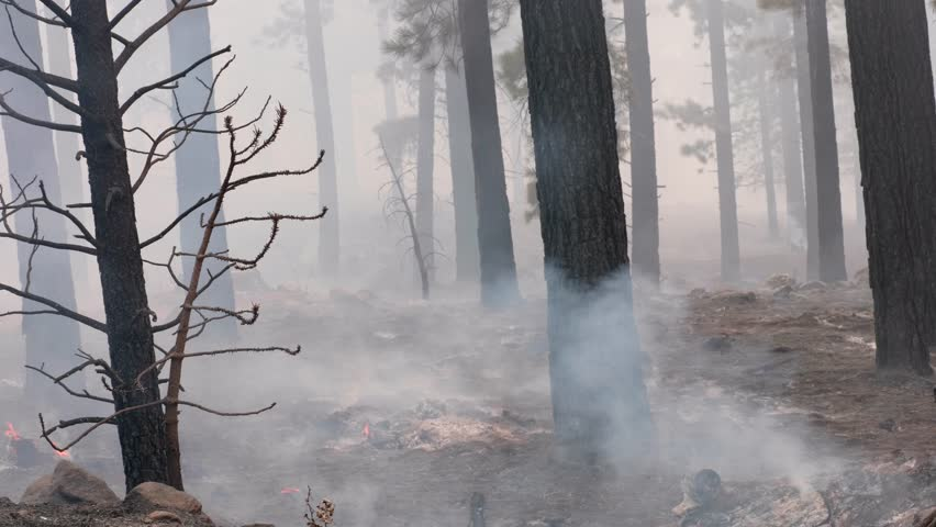 A cool shot of a smoke, fire and trees after a forest fire devestated the area