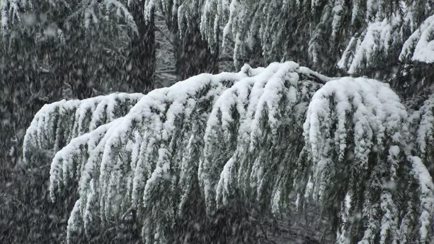 SHIBUYA,  TOKYO,  JAPAN - JANUARY 22, 2018 : Trees covered with snow at Yoyogi park (slow motion).