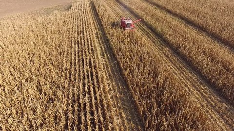 Aerial drone Footage Of Combine Harvesting Yellow Corn Field