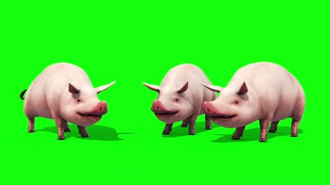 Group of Pigs Animals Farm Eating Green Screen Front 3D Renderings Animations