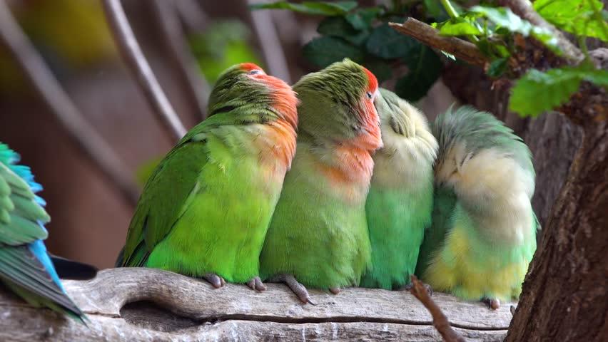 Tailfeathers bird community