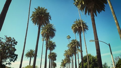 Beverly Hills street with palm trees. Sunny day. Los Angeles, California. United States.