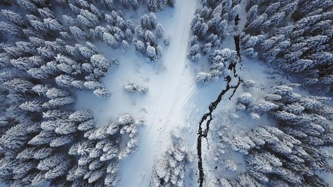 Switzerland winter landscape aerial shot / Cinematic flight over a pine forest covered with snow