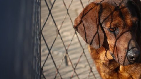 Sad dog in the cage. Camera panning.