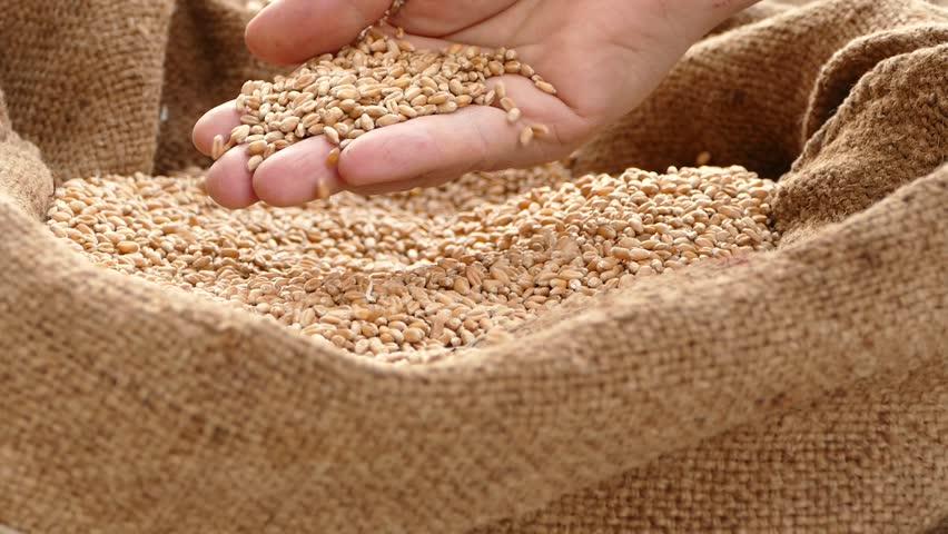 wheat sacks for sale - 852×480
