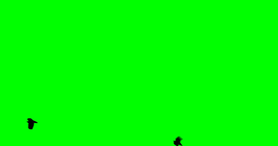 A flock of black large crow flies and flies to the green screen | Shutterstock HD Video #1007955778