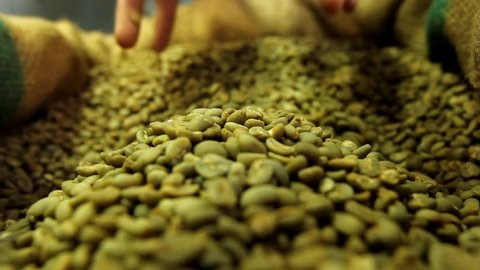Production of fresh fried coffee beans roasting factory process , prepared coffee beans mixing around on a cooling plate of an oven. Man scooping green coffee beans Arabica and Robusta from a Sacks.