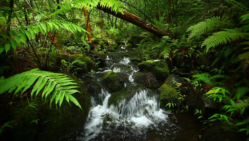 Lush Tropical Stream