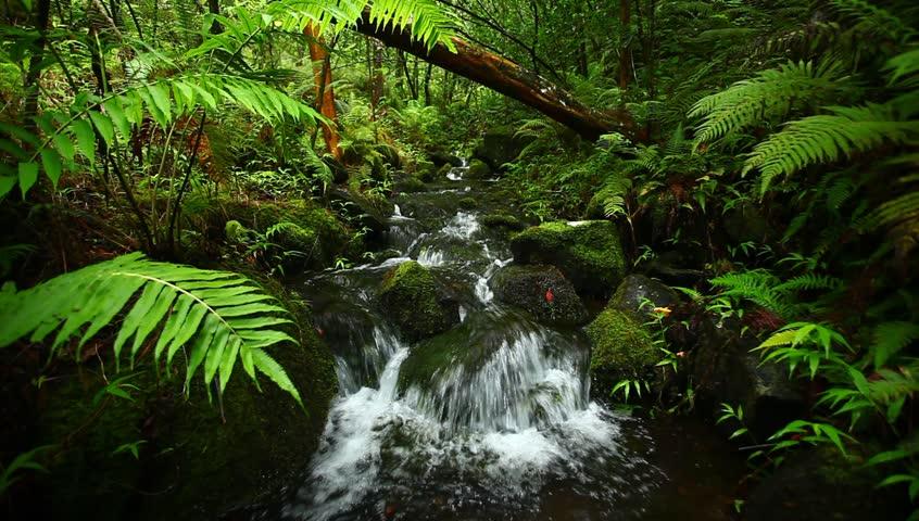 Lush Tropical Stream