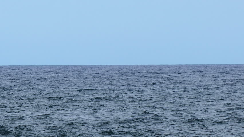 footage of a whale breach in the pacific ocean off the coast of big island in hawaii