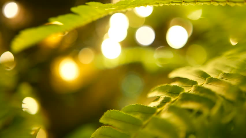 Macro tropical background with spring juicy fresh foliage of green young fern. Fairy magic mystical forest with defocused yellow lights. Sparkling bokeh with exotic tropical plants.