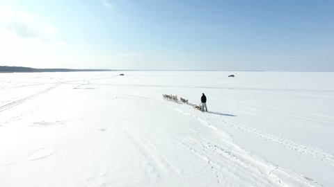 Aerial: Training sled dogs on a frozen bay in winter