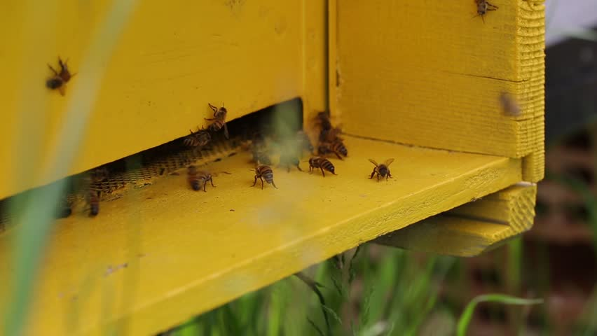 Bees convert nectar into honey Close-up Bee Flying Bee honeycomb hive, honey, apiary macro
