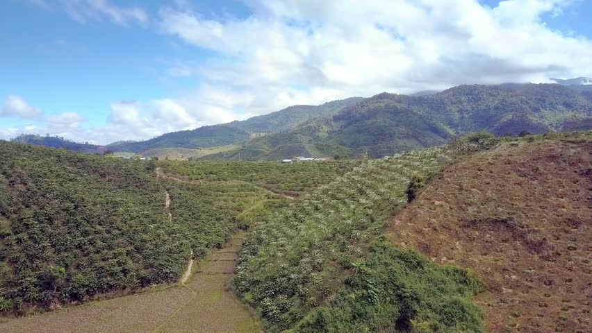 pictorial aerial view Vietnamese highland with coffee trees flowering on green hill slopes against blue sky with clouds