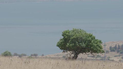 Sea of Galilee with a tree in the foreground, June 7, 2017.