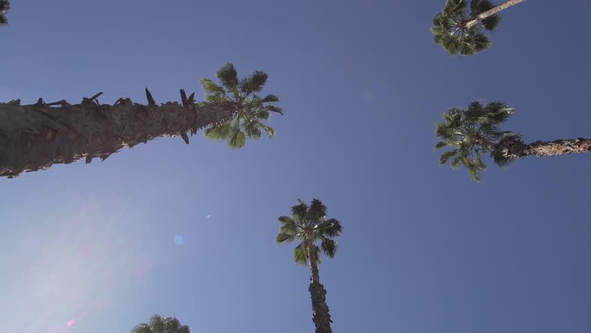Rotating palm trees gimbal shot Jardin Majorelle trees down up | Shutterstock HD Video #1008505918