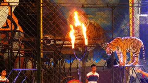 CHONBURI, THAILAND, JANUARY 17, 2018: Tiger Jumps Through Ring of Fire in the circus arena. Tiger tamer and tigers in a cage at a circus performance tricks. Circus, Cage of the Tigers. Thailand
