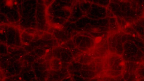 Seamless digitally generated fractal motion suggests blood vessels or nervous system