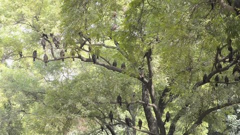 An Eagles resting in a sunny day at Nainital Zoo in New Delhi, India.