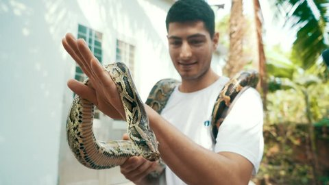 Young male tourist holds a Burmese Python around his neck as his friends take photos on their cameras