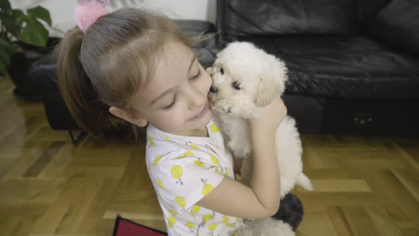 Beautiful female child holding in hand cute bichon puppy and caressing with sweet little white pet, other doggies playing next to the young girl, kid and adorable baby dogs close up, handheld shot.