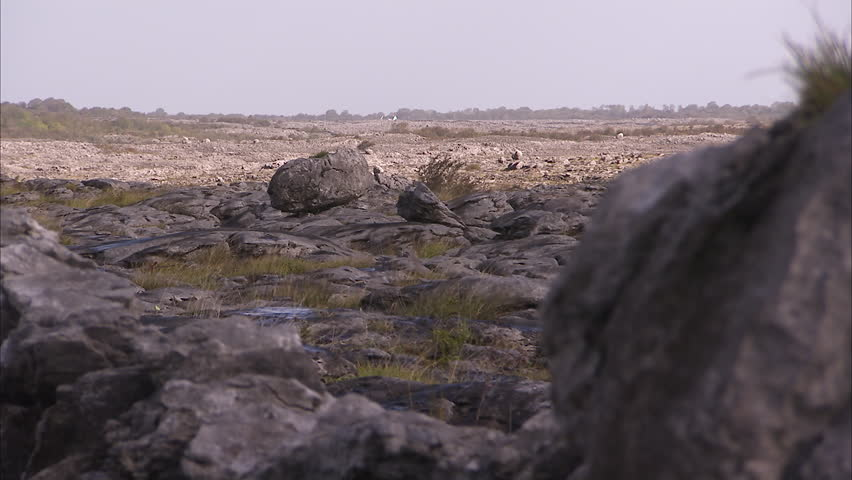 A steady worm's eyes view shot of a rocky landscape in Ireland.   Shutterstock HD Video #1009121708