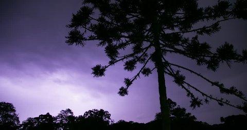 Time lapse 4K - Ominous storm and a Araucária Tree. São Cristóvão do Sul, Santa Catarina / Brazil