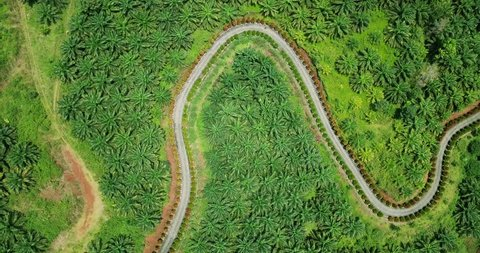 Beautiful aerial view of meander road on the palm oil plantation at Sukabumi, West Java, Indonesia. Shot in 4k resolution
