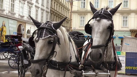 VIENNA, AUSTRIA - SUMMER, 2017: Two horses, a team at St. Stephen's Cathedral. Vienna, Austria. Shot in 4K (ultra-high definition (UHD)).