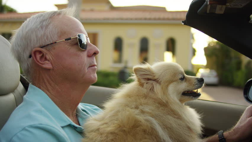 Active Senior Man Drives Through Affluent Neighborhood With His Happy Dog In Sunny Florida - Shot On Red Scarlet-W Dragon In 4K/ Slow Motion