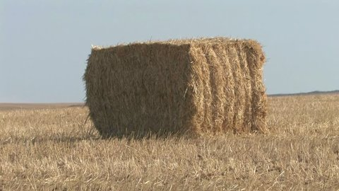 Haystacks in field Haystack in the Golan Heights field Israel