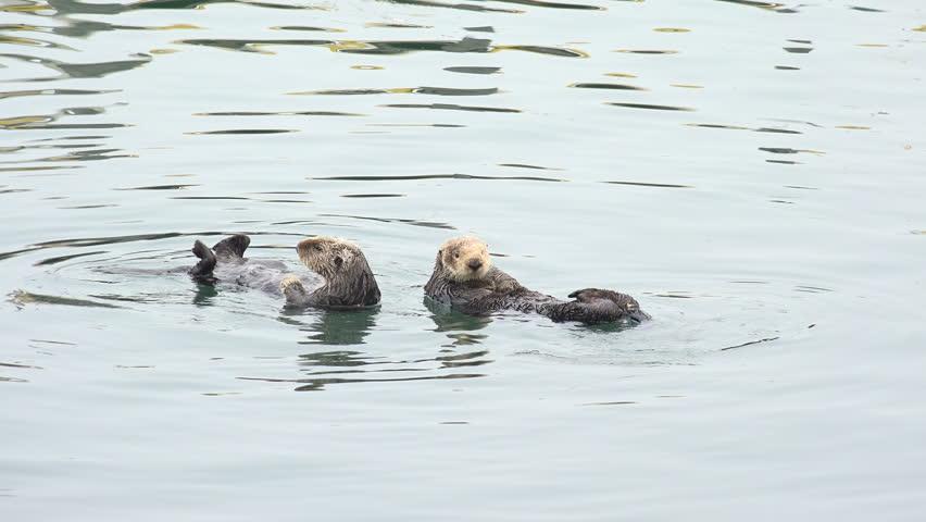Download otters species endangered sea filetype
