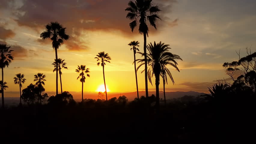 Silhouette of palm trees and a beautiful sunset. | Shutterstock HD Video #1010055038