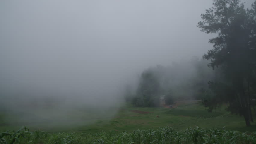 Rapid Moving Moving Cloud or Fog over cornfield in Caribbean Mountain Hill
