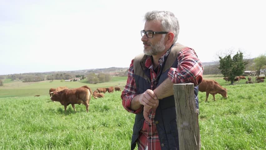 Farmer standing in field with cattle in background | Shutterstock HD Video #1010236328