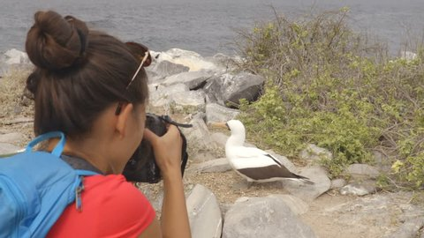 Galapagos tourist taking pictures of Nazca Booby on Espanola Island, The Galapagos Islands. Wildlife photographer and ornithologist photographing the Galapagos nazca boobies.