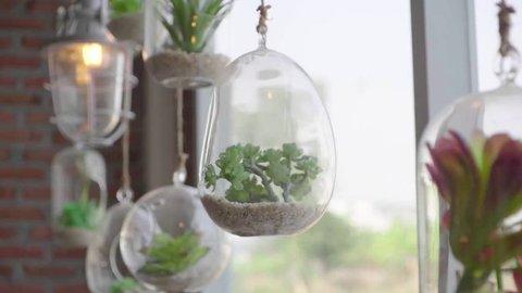 Succulent in glass terrarium for decorative