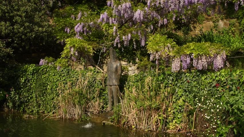 pond in a garden with beautiful purple wisteria in bloom. 4K Ultra HD Video