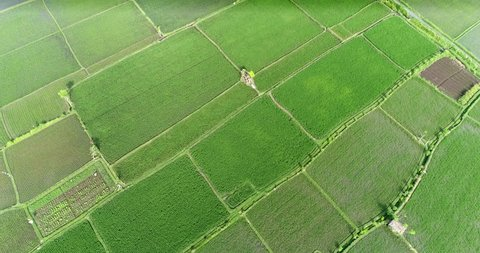 Aerial view of rice field. Flying over of asian paddy field - Bali, Indonesia