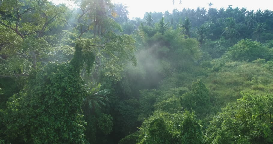 Aerial view of foggy rainforest. Flight over of jungle | Shutterstock HD Video #1010565908