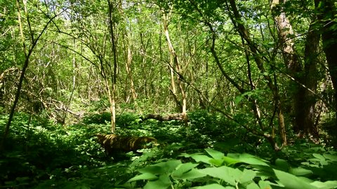 View of spring green trees and lilies of the valley in the floodplain forest Black river in the foothills of the Caucasus