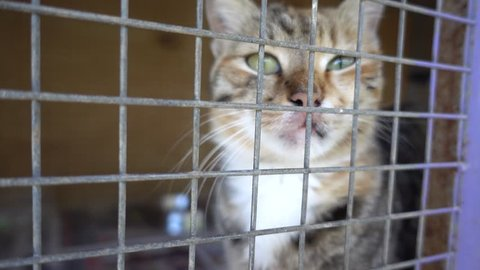 4K Single cat in cage mews asking for caress