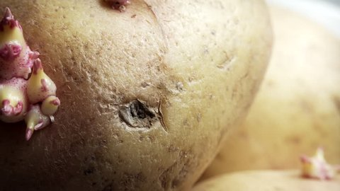 Root growing out of Potato extreme close up stock footage