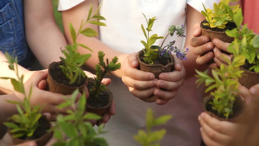 Children's hands holding sapling with plants | Shutterstock HD Video #1011079118