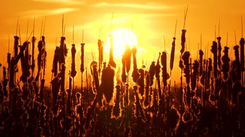 Silhouette of plants with a big sun on background