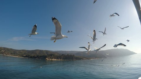 View from the sea to seagull birds and the temple on the Holy mount Athos in Greece